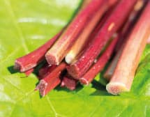 rhubarbe anti constipation