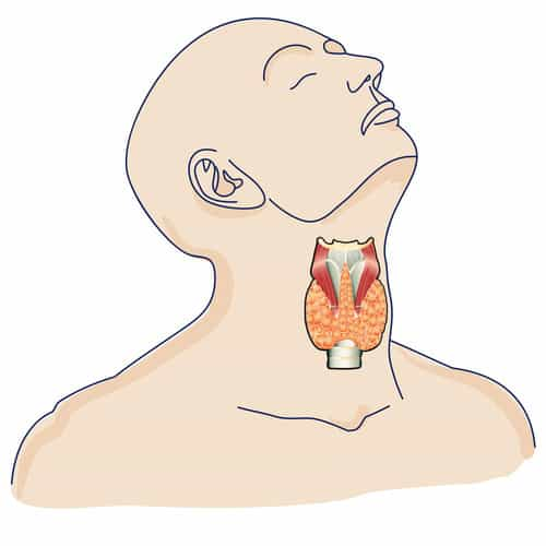 glande thyroide